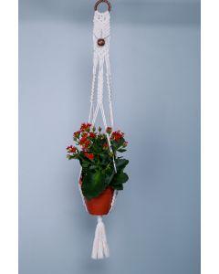Hanger Plant